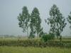 2006betonamu_057