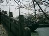 20083musyaku_058
