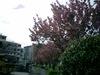20084shinyoko_005