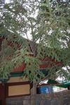 20111tanra_354