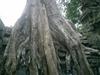 Angkor_189