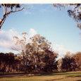 森に囲まれたゴルフ場