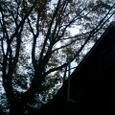 小屋の屋根