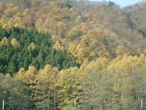青木湖周辺 紅葉