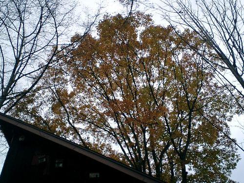山小屋 ほうば紅葉