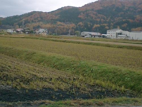飛行場 タンボ秋風景