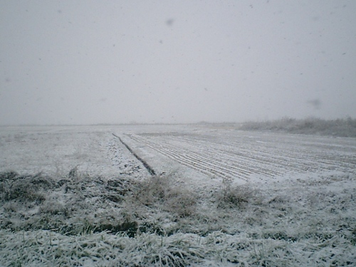 一面雪景色 初雪だ!
