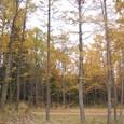 山小屋の森