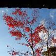 空と紅葉と