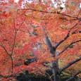 紅葉のアーケード