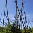 枯れ木と青空