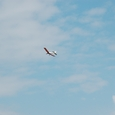 珍しく快調に飛行するスバル