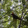 遭難機 トチ大木