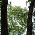 樹の上の飛行機
