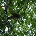 トチの木の上の飛行機