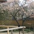 旧目加田家住宅 庭と梅