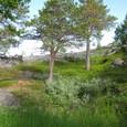 岩盤の上に木が生える