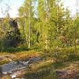 白夜と北極圏の森