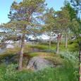 岩盤に立つ木