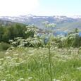 雪を抱く山と草花