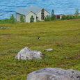 アルタの海と鳥