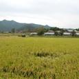 藁ぶき屋根と稲穂 日本の田舎と同じだ