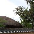 柿の実と草ぶき屋根
