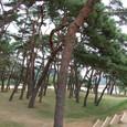 洛東江と松林