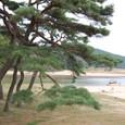 美しい洛東江と松