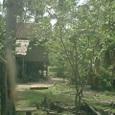 森の中に住居