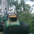 象のタクシー乗り場