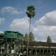 椰子の木と本殿