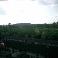 中央祠堂から眺める密林