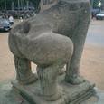 ライオンの面白いお尻