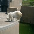 白熊君 ウンチです