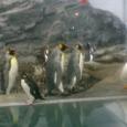 ペンギンさんたち