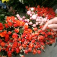 バラの花屋さん