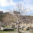 アスクレピオン 命の木