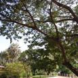 ヤシの木に囲まれた日本庭園