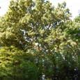 朝日を浴びる木々