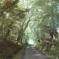 木々に守られた散歩道