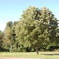 朝日を浴びる木