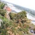 城から眺めるドナウ川
