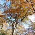 この多量の落ち葉が腐葉土となる