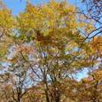 森は紅葉に包まれる
