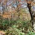 新野地温泉への道