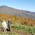 高山(1804メータ)とブナの森