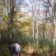 ブナの森の早朝散策
