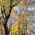 森の空は紅葉で包まれる