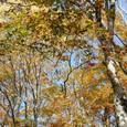 枯れた葉もこれから大地の生命を育てる
